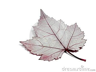 Anatomia da folha