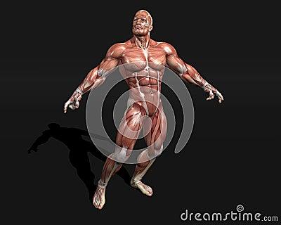 Anatomic modell