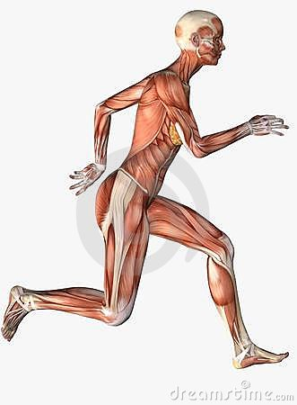 Anatomical female running