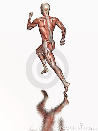 Anatomical human running