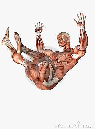 Anatomical man falling