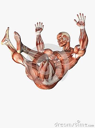 Anatomical man falling