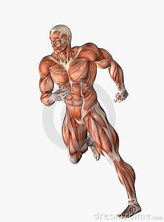 Anatomical man running