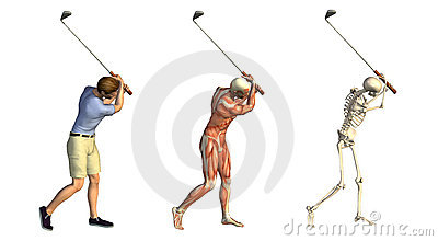 Anatomical Overlays: Golf Swing