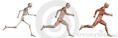 Anatomical Overlays - Man Running Side View