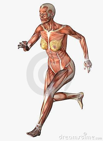 Anatomical woman running