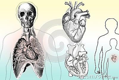 Anatomii istota ludzka