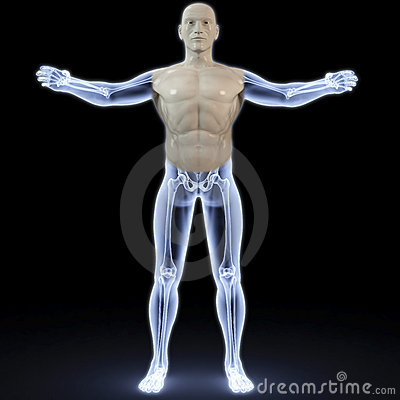 Anatomy Stock Photo - Image: 18342310