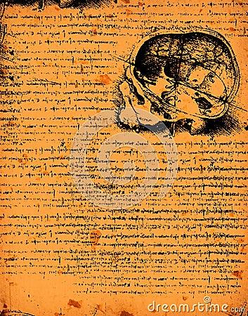 Anatomy Art Royalty Free Stock Image - Image: 33009476