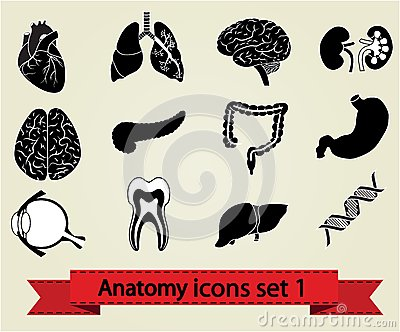 Anatomy icons set 1