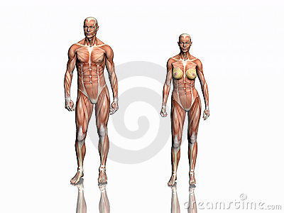 Anatomy of man and woman.