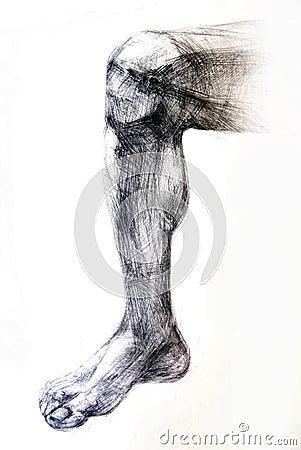 Anatomy Muscles.Drawing studio works