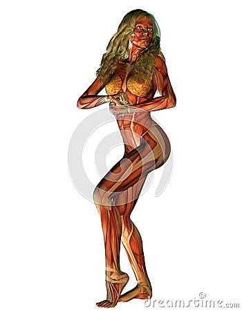 Anatomy muscles woman