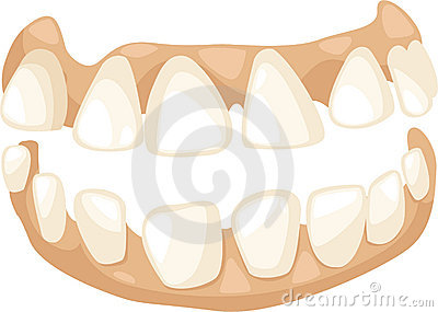 Anatomy teeth vector