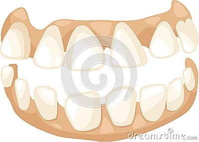 Anatomy teeth vector