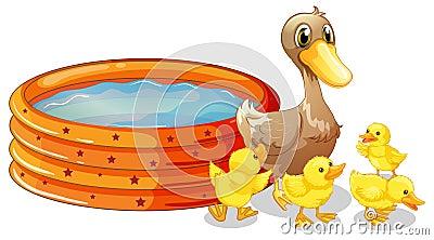 Anatre accanto alla piscina per bambini immagini stock for Vasca per anatre