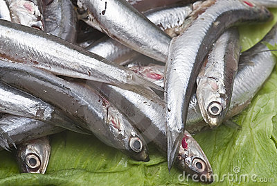 Anchovies to be sold.