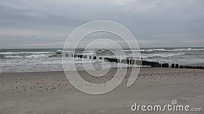 Ancienne jetée abandonnée poteaux en bois jetée pieux sur la plage de mer baltique banque de vidéos