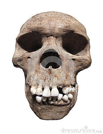 Free Ancient Human Skull Isolated. Royalty Free Stock Photo - 32007315
