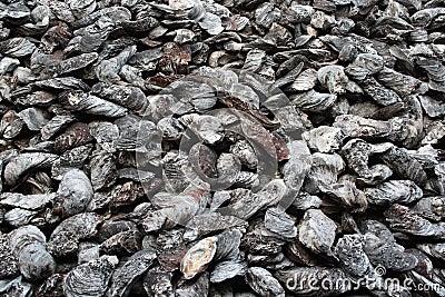 Ancient shellfish fossil