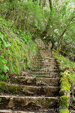 Free Ancient Stone Stairs In The Forrest Stock Images - 6667234