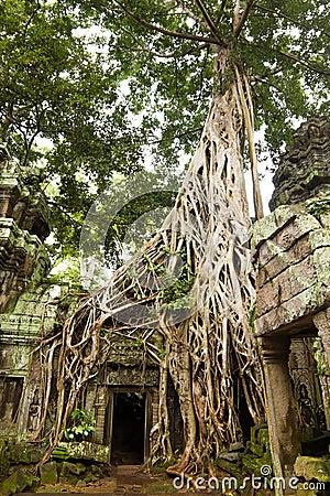 Ancient Ta Prohm Temple