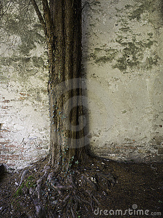 Ancient Tree and Wall