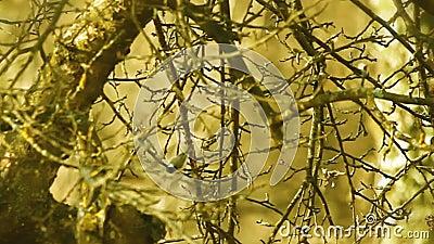 Ancora ha sparato dei rami e dell'albero nel colore specifico stock footage
