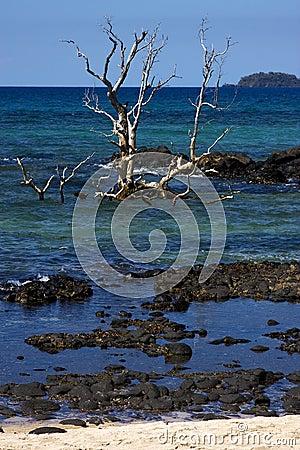 Free Andilana Beach S Tree Stock Image - 27682481