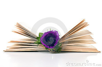 Anemone flower in an old book