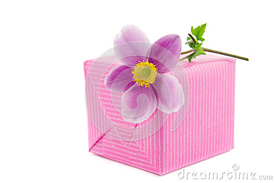 Anemone flower on a present