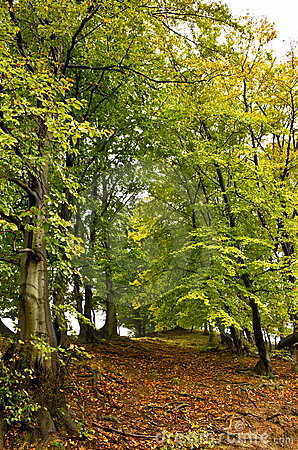 Anfang des Herbstes
