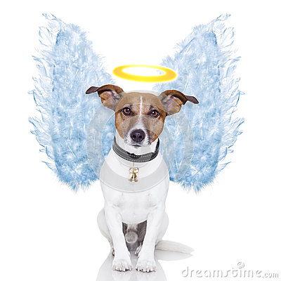 Free Angel Dog Feather Wings Aura Royalty Free Stock Photos - 27391748