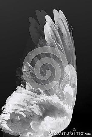 Angel s wings