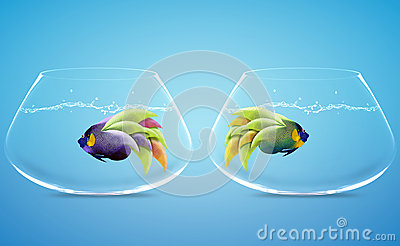 Angelfish in difference way