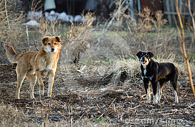 Anger stray dogs