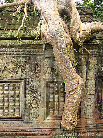 Free Angkor Wat Banyan Roots Temple Ruins Cambodia Stock Photos - 78173