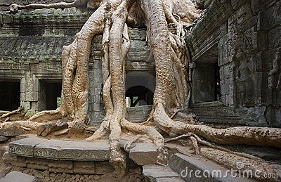 Angkor Wat - Ta Prohm Temple - Cambodia
