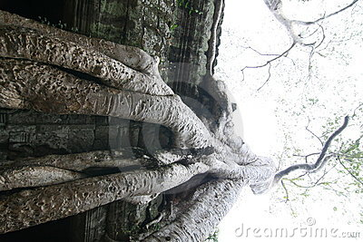 Angkor Wat temple and tree