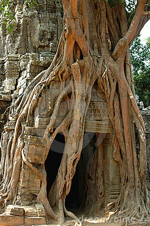Angkor Wat Tree,Cambodia