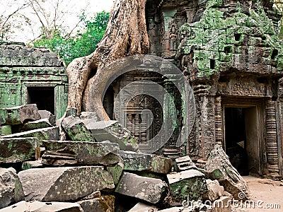 Angkor柬埔寨prohm ta寺庙wat