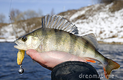 Angler with caught fish