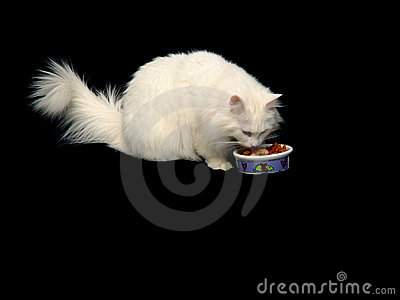 Angora Cat Eating Food