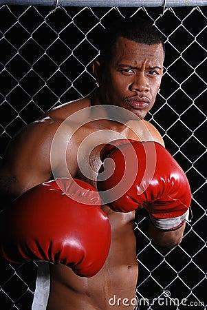 Angry Boxer.