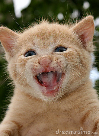 Free Angry Cat Royalty Free Stock Photos - 375748