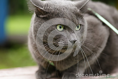 Angry cat defending his territory