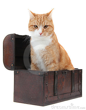 Angry tomcat in treasury chest