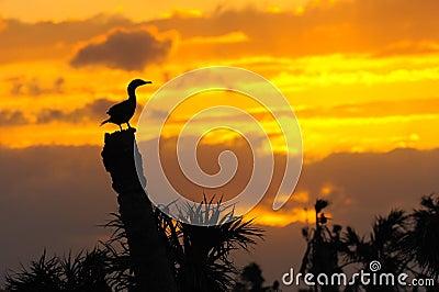 Anhinga Sunset 3