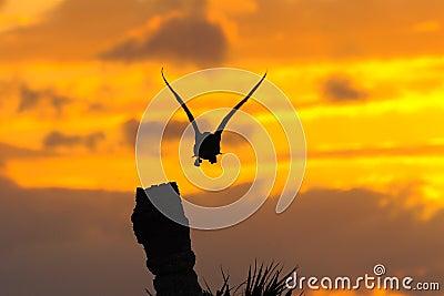Anhinga Sunset 4