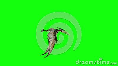 Animación de la mosca 3d del pterodáctilo Cantidad verde de la pantalla 4k